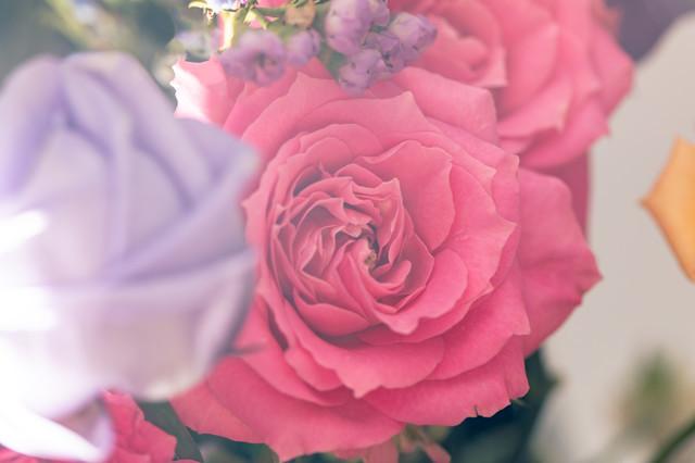 flowerFTHG1966_TP_V1.jpg