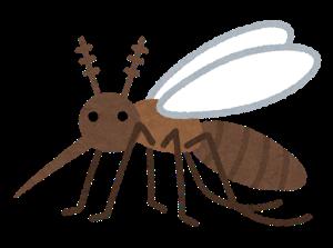 bug_ka4_seichu.png