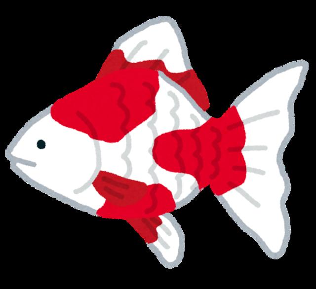 fish_kingyo2.png