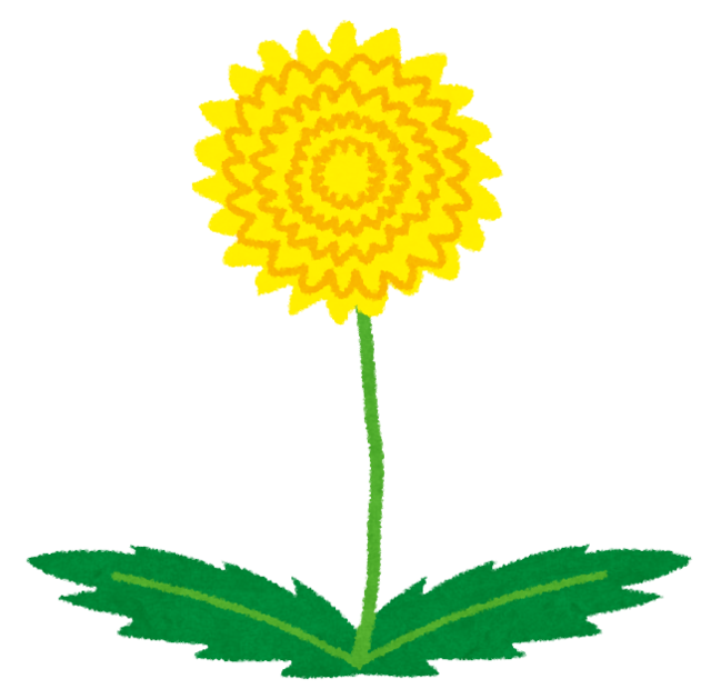 flower_tanpopo.png