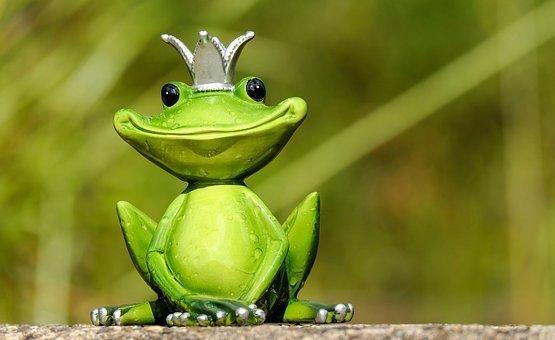 frog-2240764__340.jpg